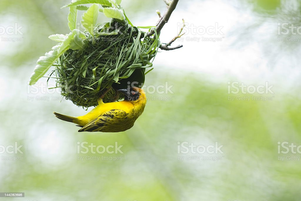 Industrious Bird stock photo