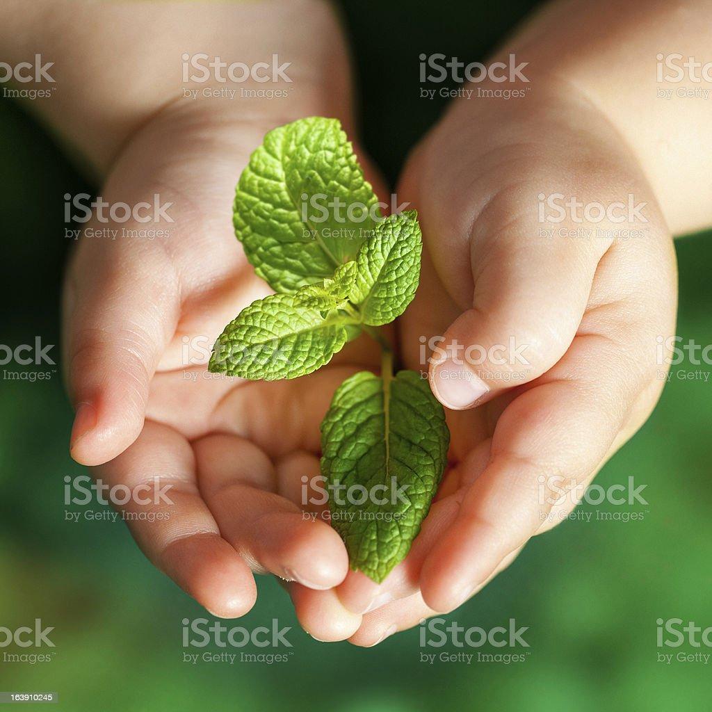 Enfant mains tenant Plante verte. photo libre de droits