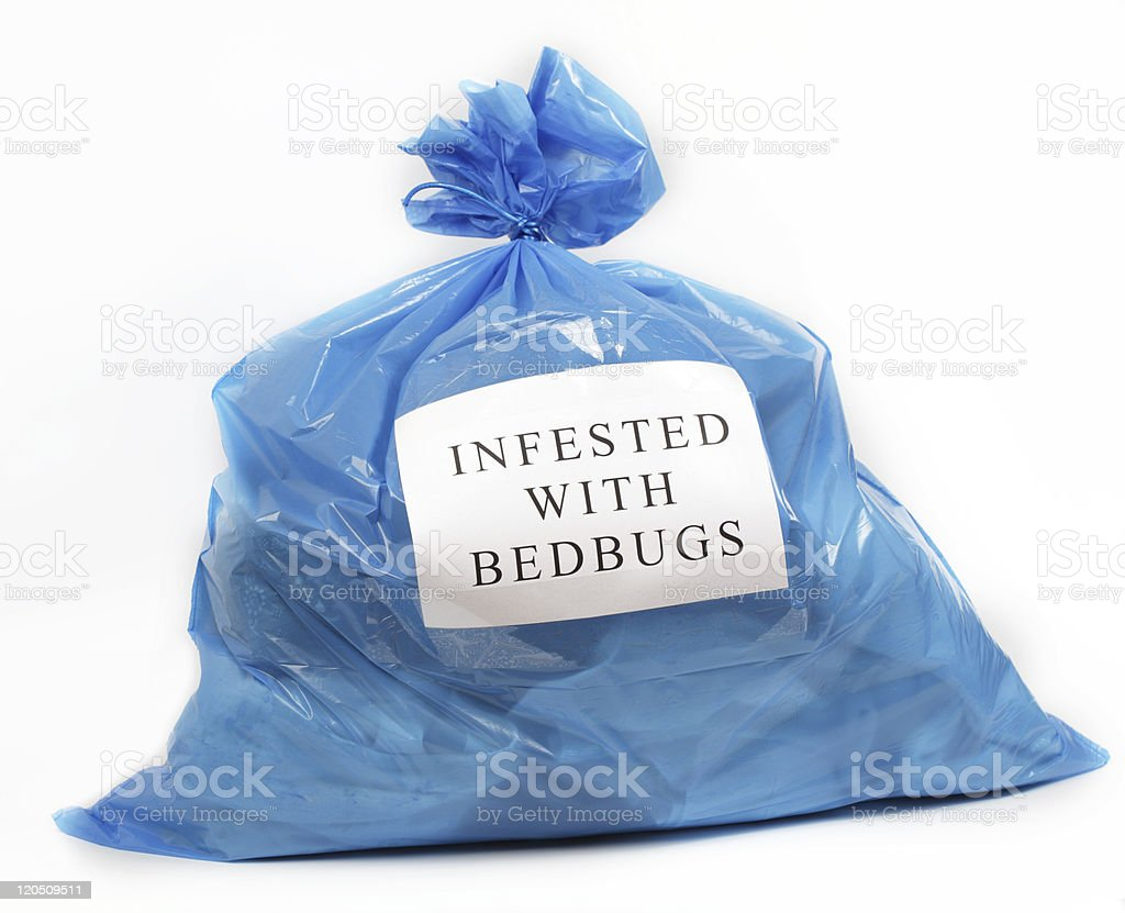 Infested with bedbugs stock photo
