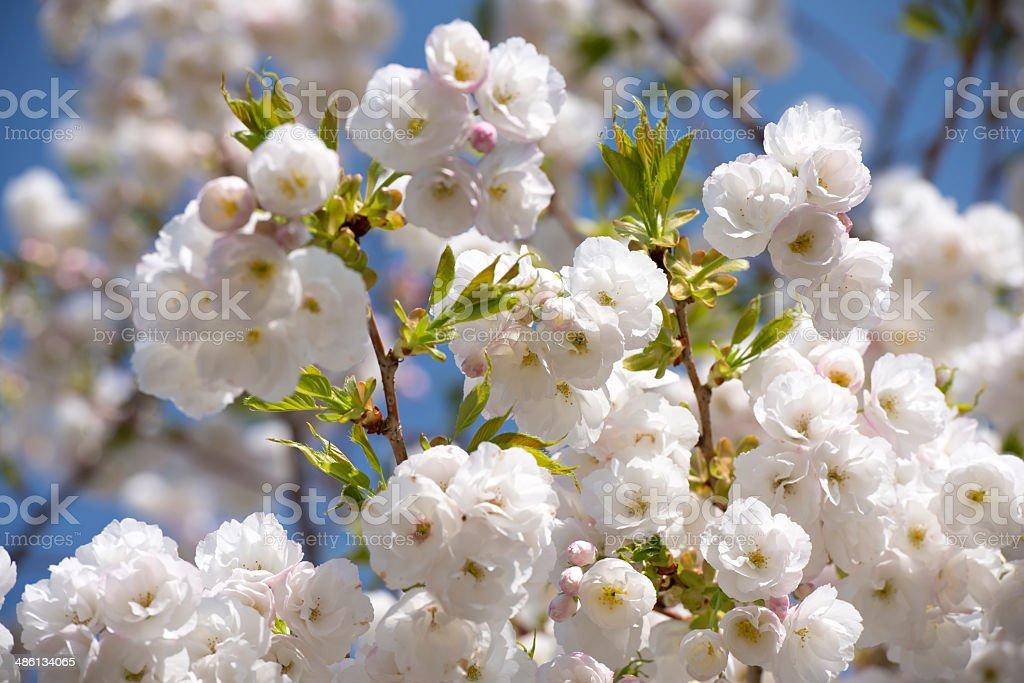 Inflorescence primavera atmosfera gioiosa foto stock royalty-free