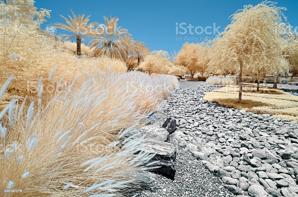 Infrared image of trees and shrubs in false color stock photo
