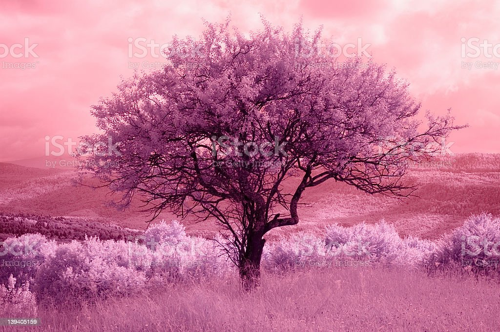Infra-red landscape 3 royalty-free stock photo