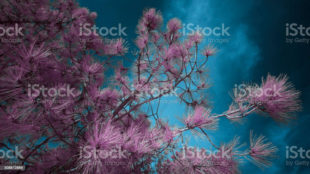 Infrared Leaves and Landscape stock photo