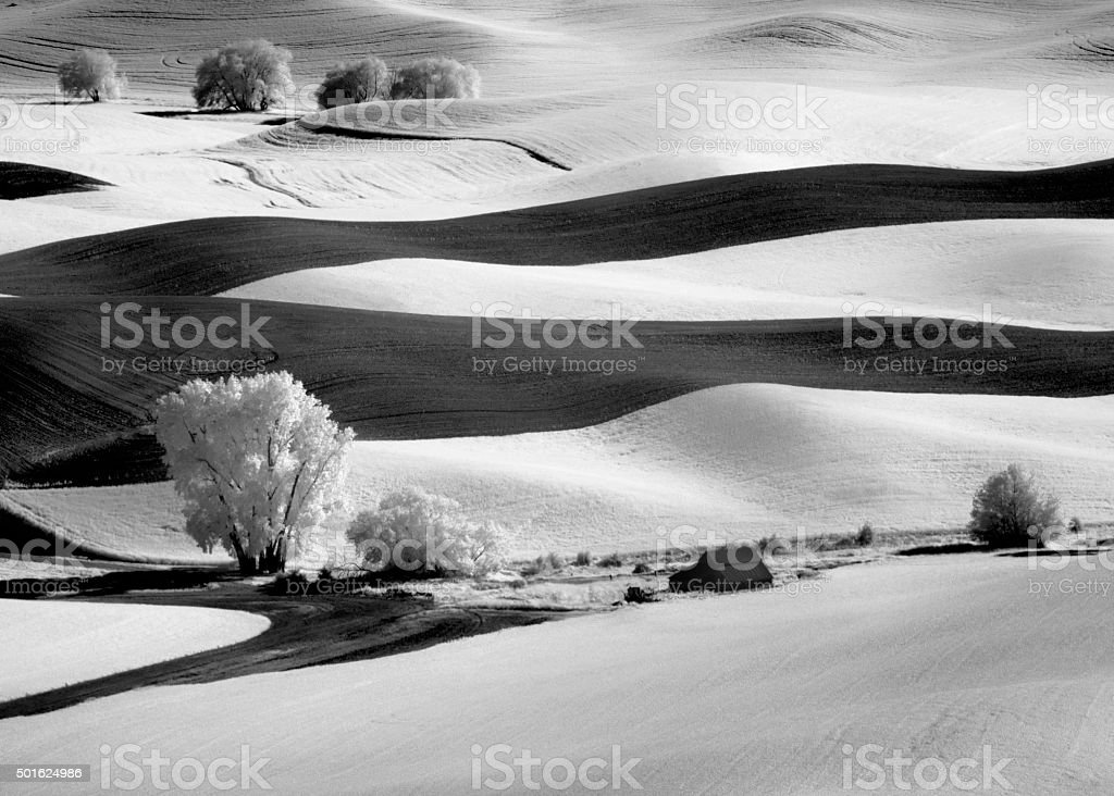 Infrared Palouse Fields and Trees stock photo