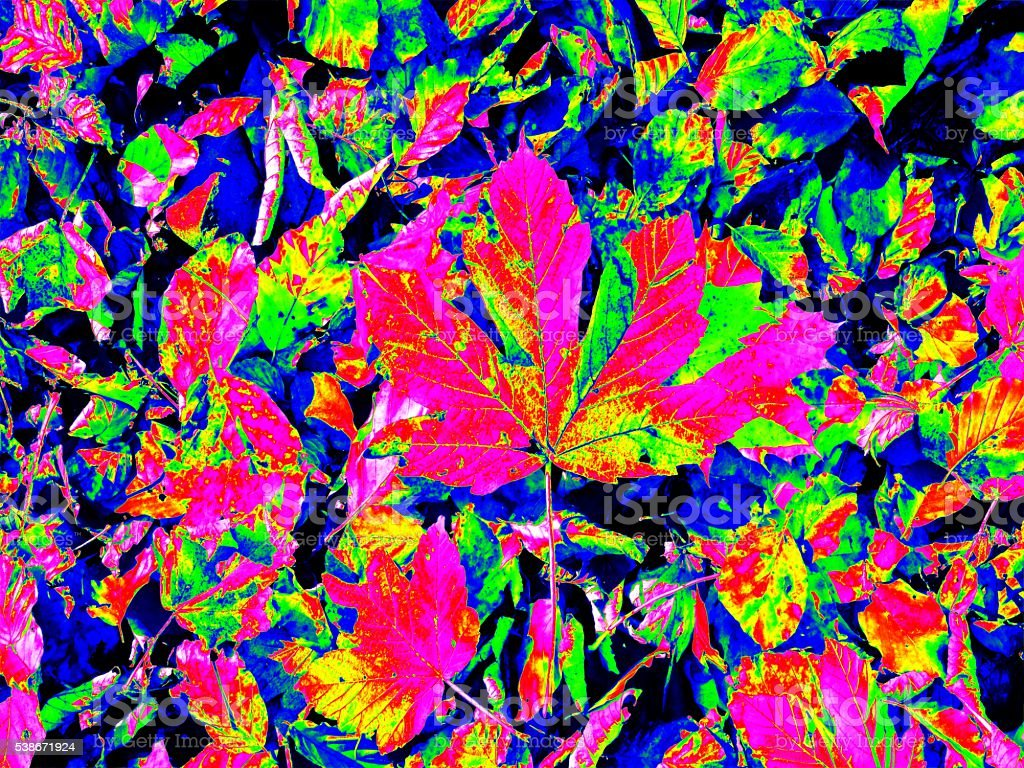 Infrared scan of leaves on park ground. Chesnuts leaves stock photo
