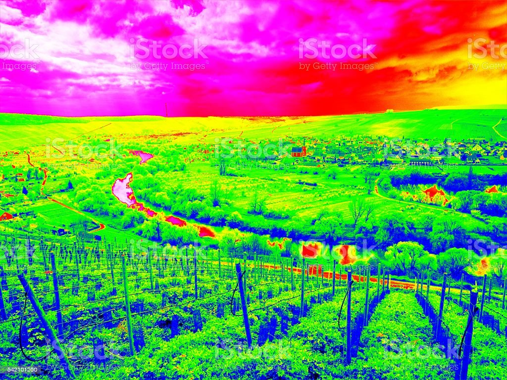 Infrared scan of vineyards arranged in regular rows covering landscape stock photo