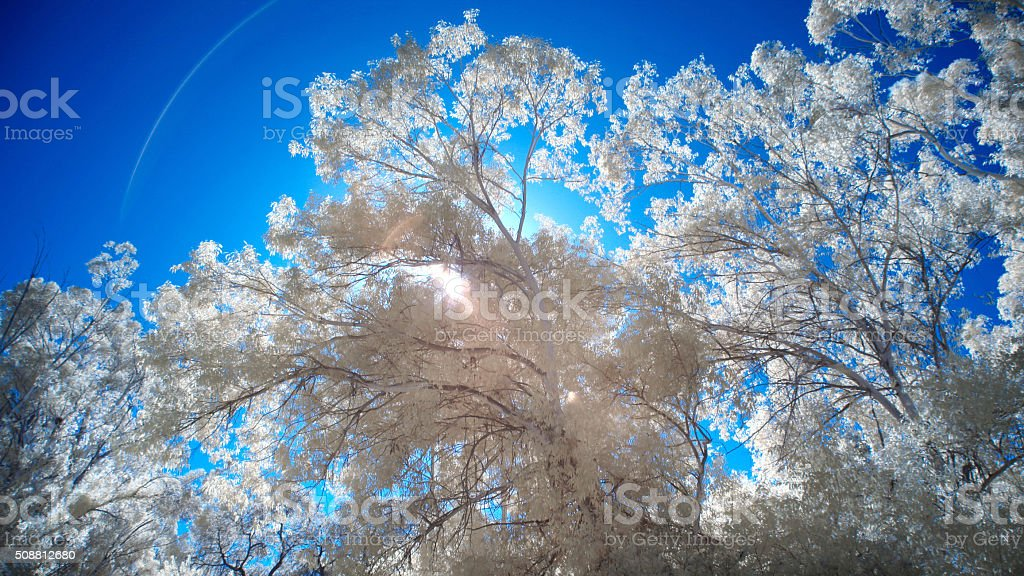 Infrared Trees and Landscape stock photo