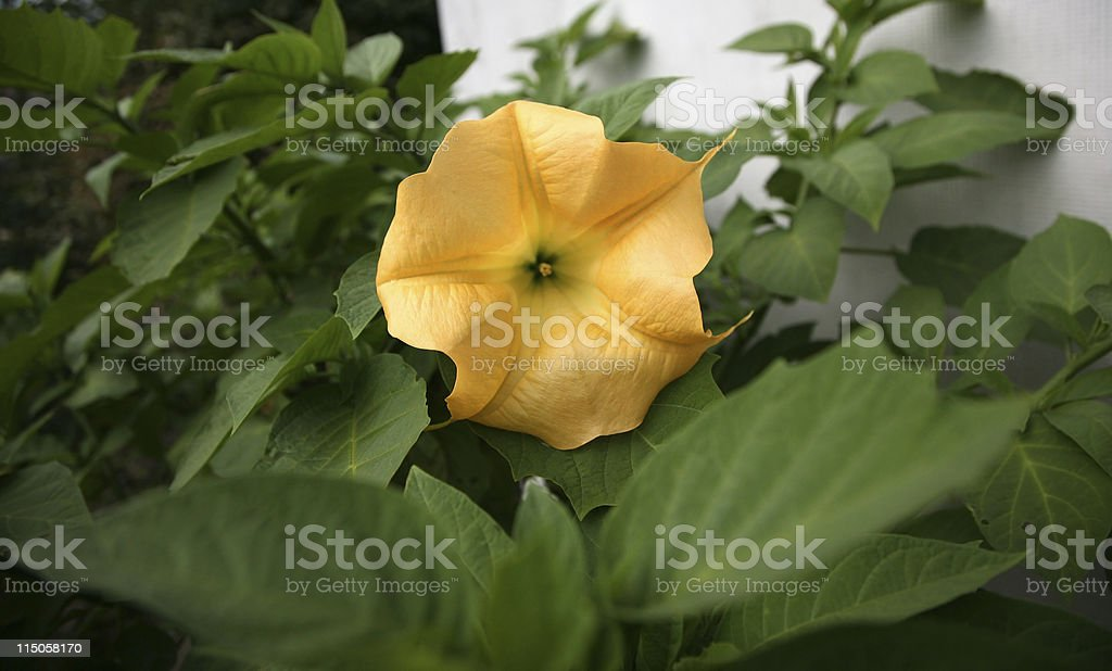 infrequent flower stock photo