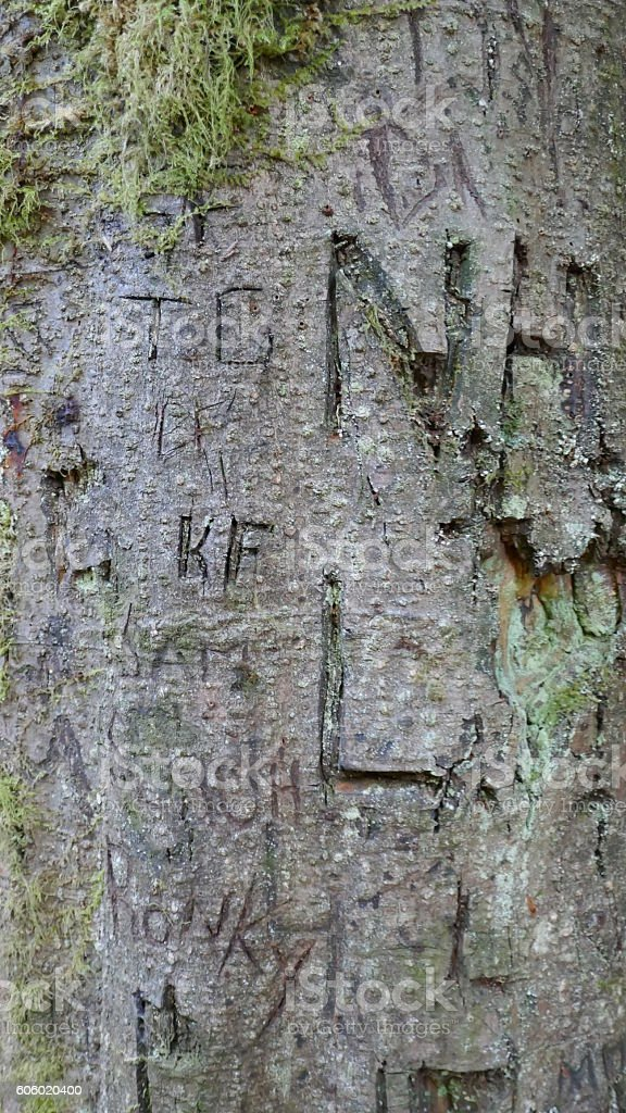 Initials carved in tree trunk stock photo