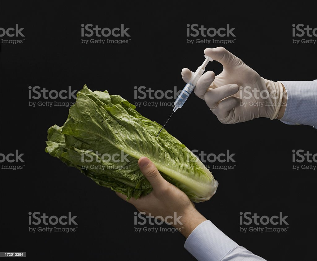 Injecting Lettuce royalty-free stock photo