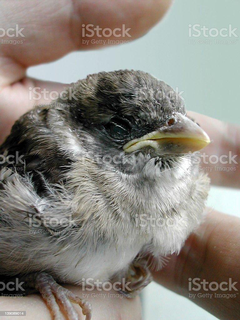Injured Bird stock photo