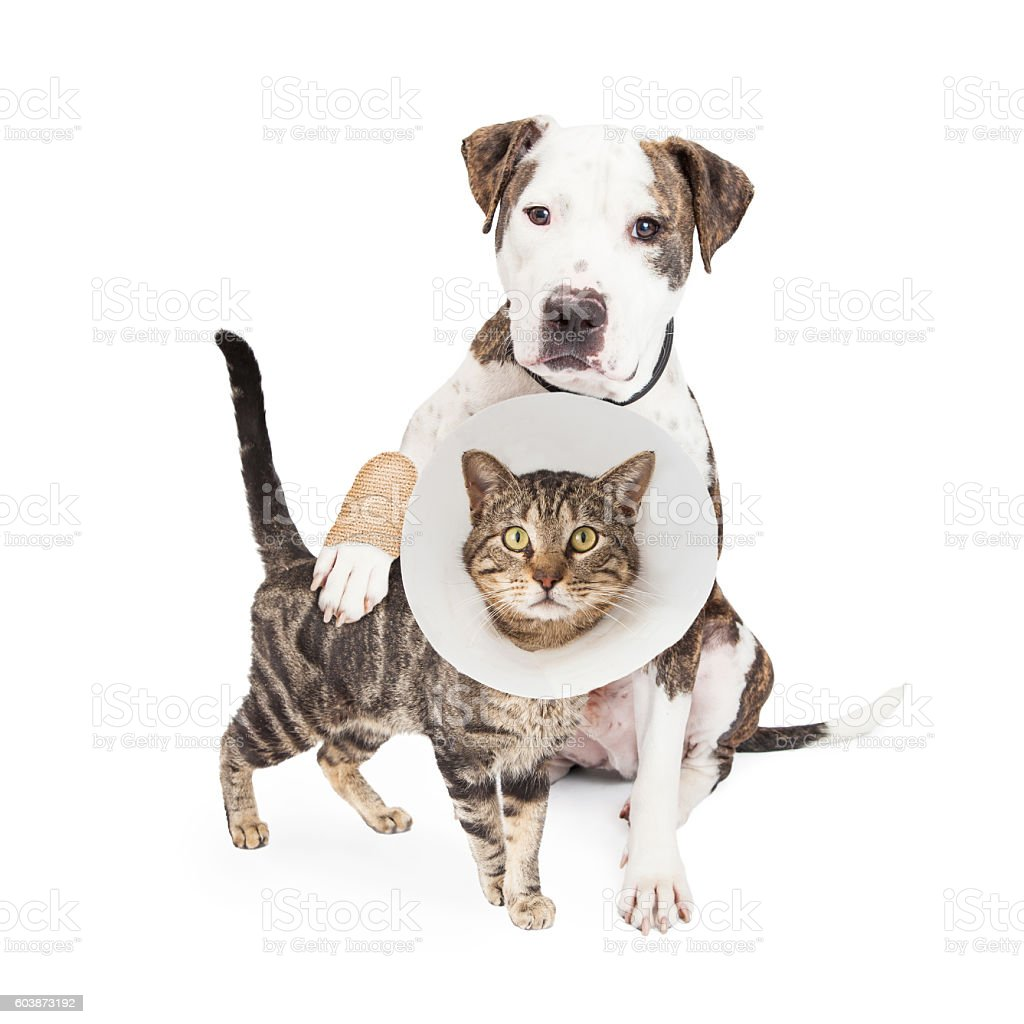 Injured Dog and Cat Together stock photo