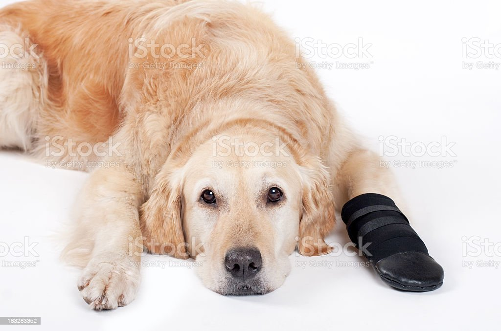 Injured Dog royalty-free stock photo