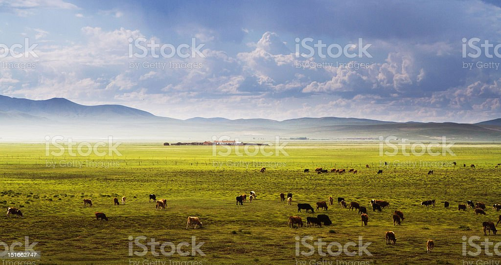 Inner Mongolia Prairie,in China stock photo