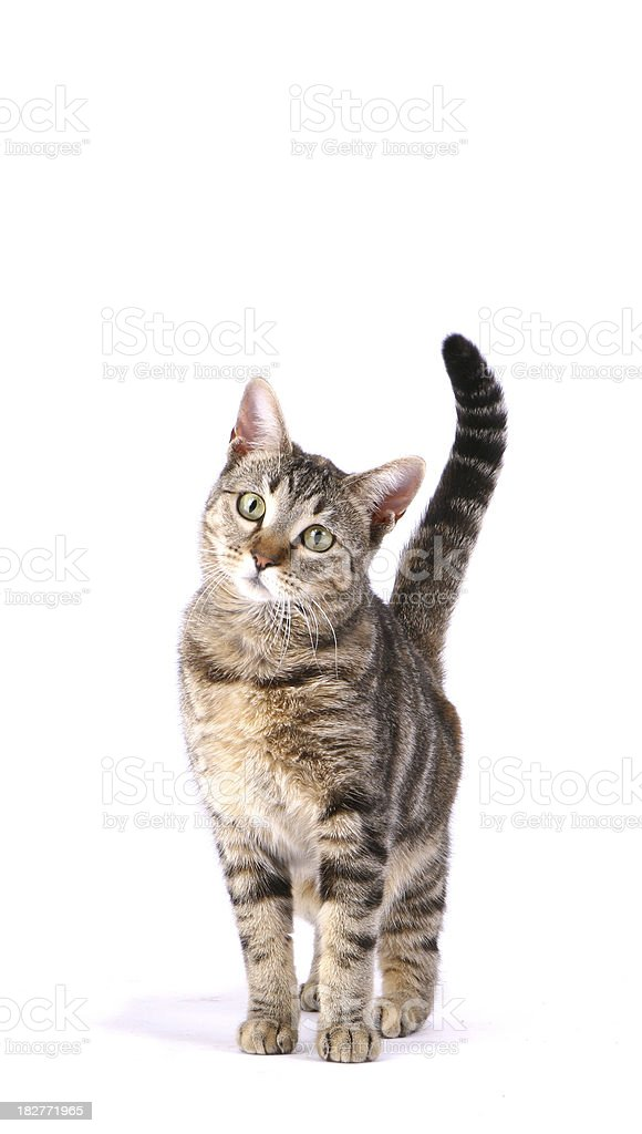 Inquisitive Cat stock photo