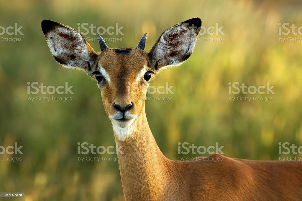 Inquisitive stock photo