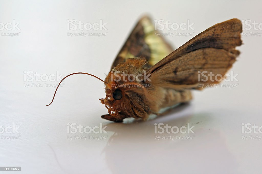 Insect Alien royalty-free stock photo