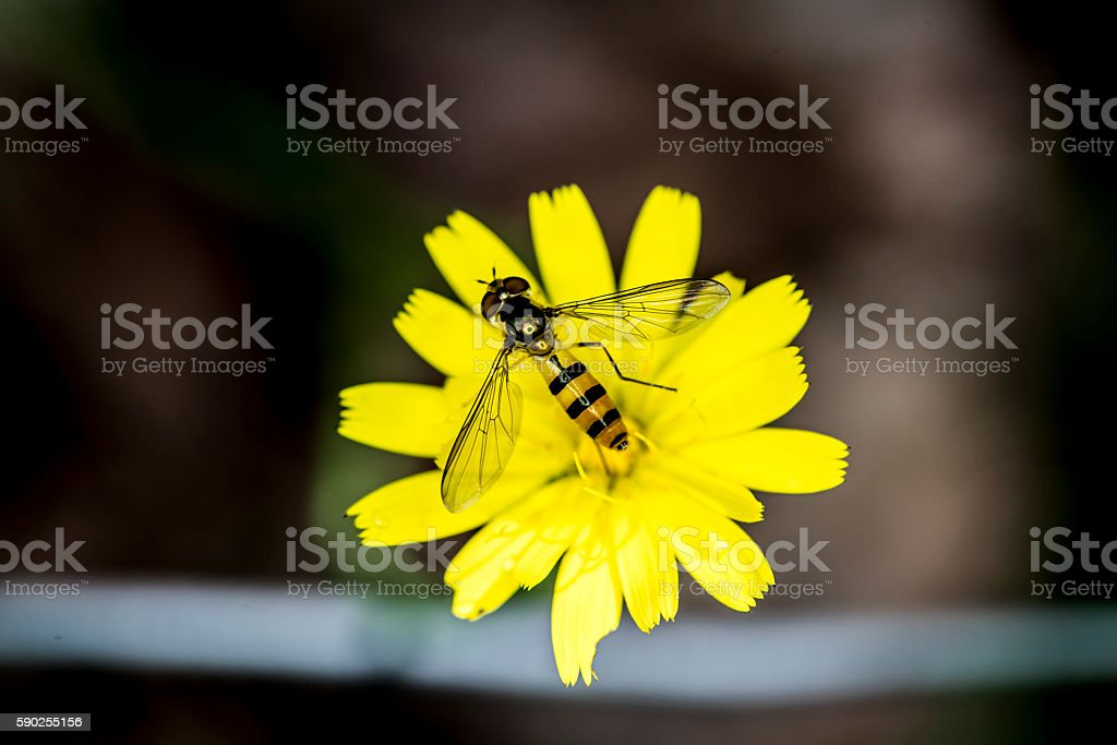 insect and flower in the garden stock photo