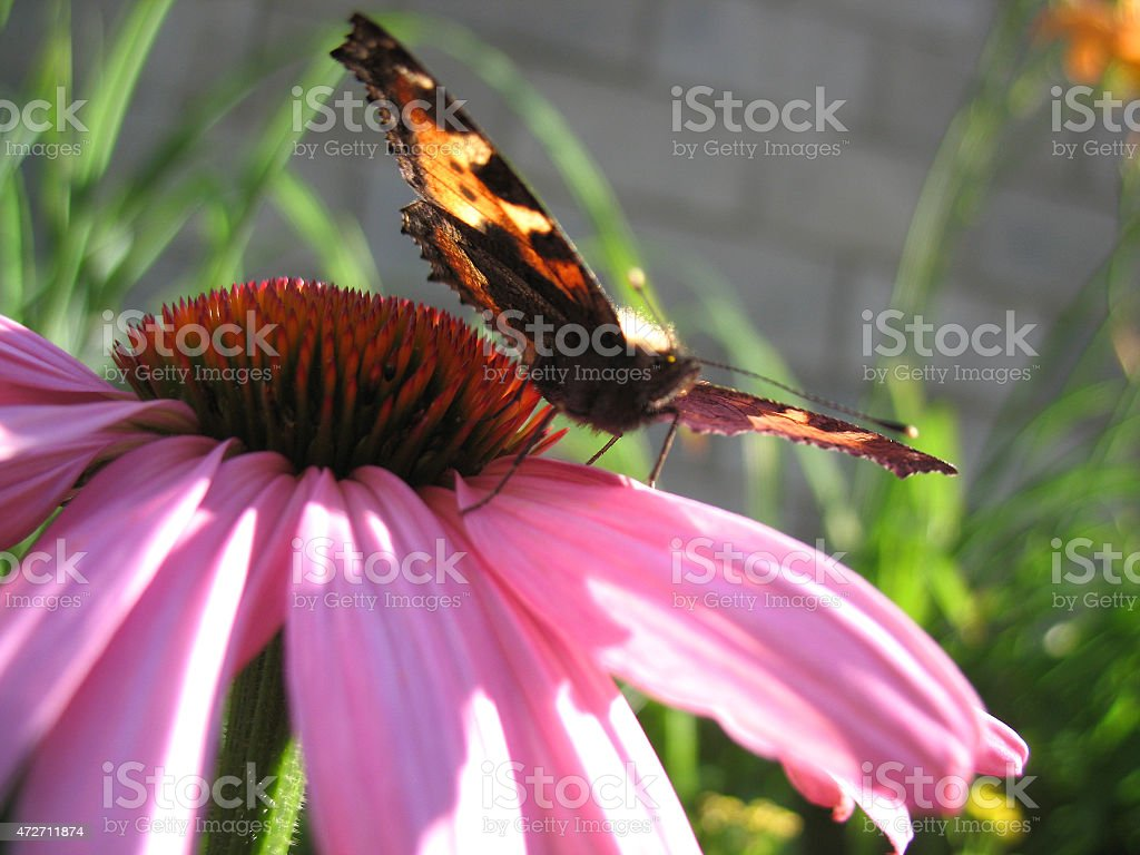 insect and flower stock photo