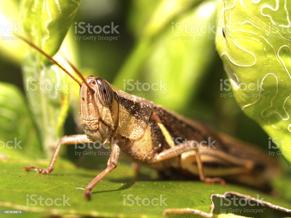 insect bug royalty-free stock photo