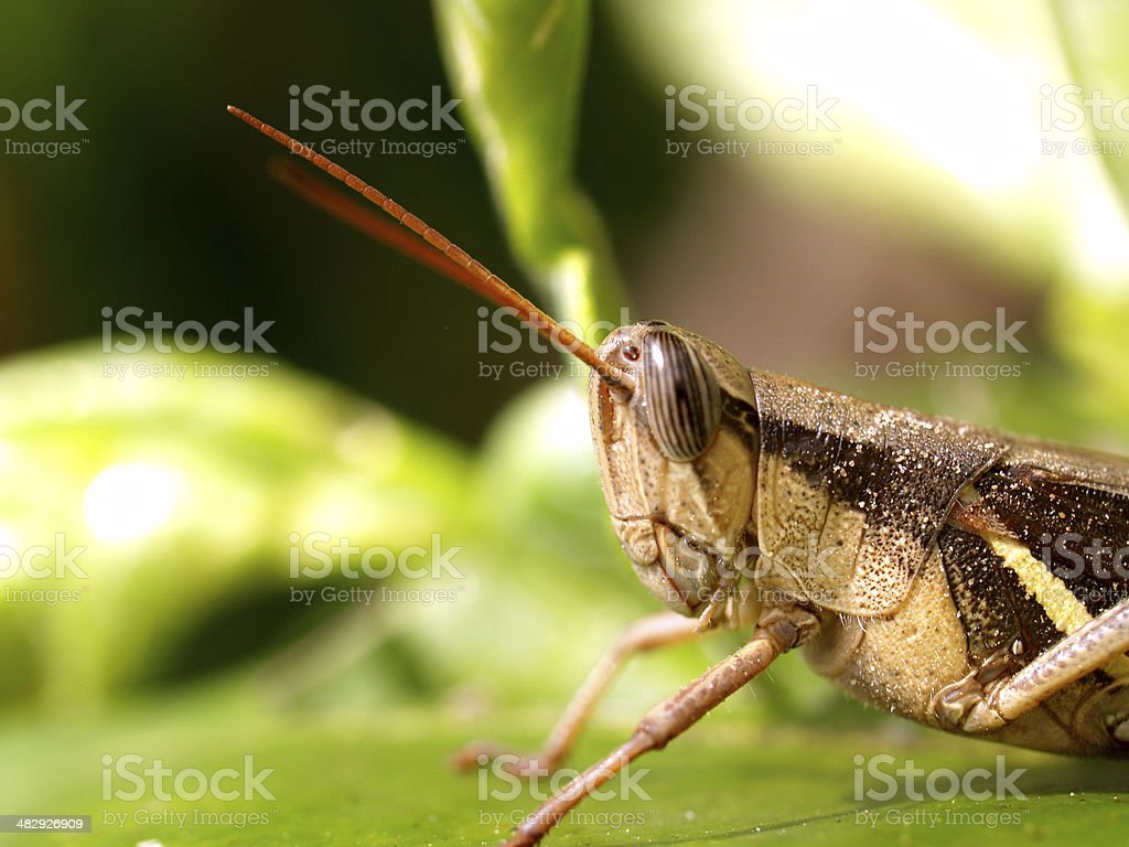 insect bug stock photo