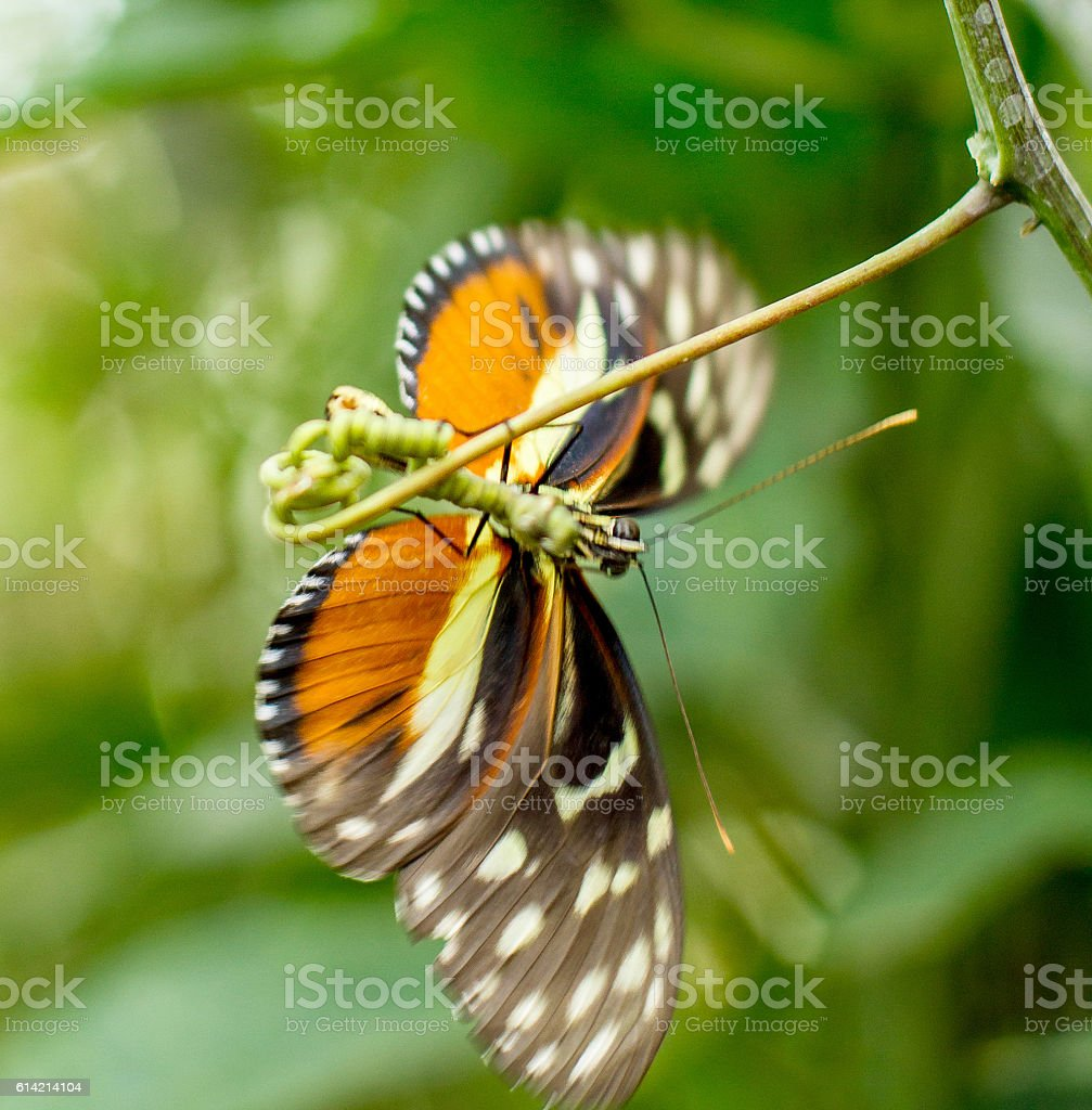 insect butterfly on green background, blurred stock photo