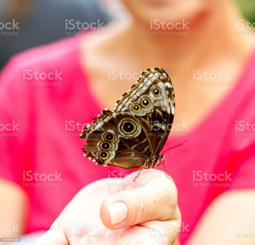 insect butterfly on women hand, blurred stock photo