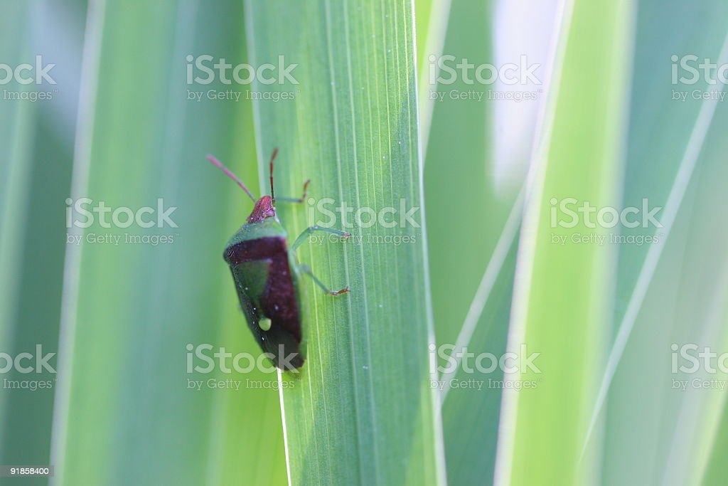 Insect Climbing up Grass royalty-free stock photo