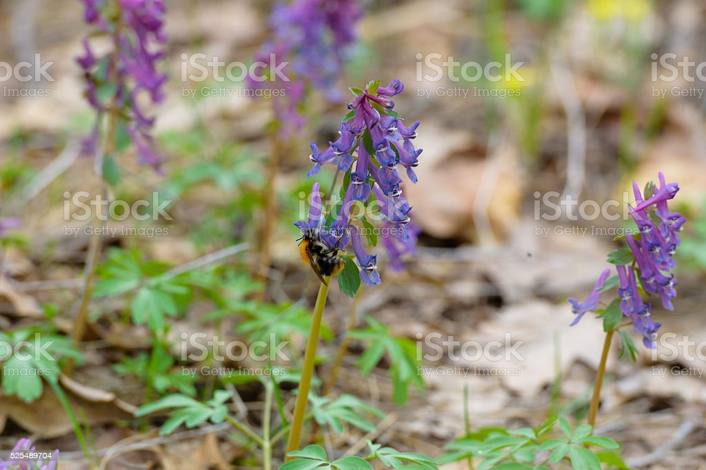 insect flower bee stock photo