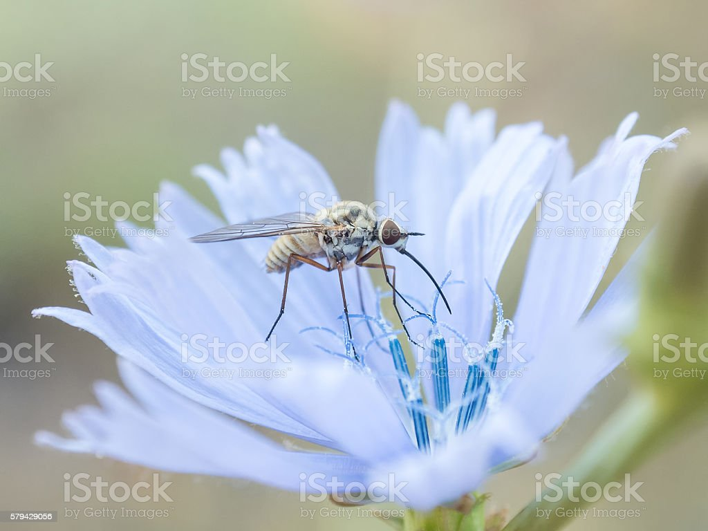 insect flower stock photo