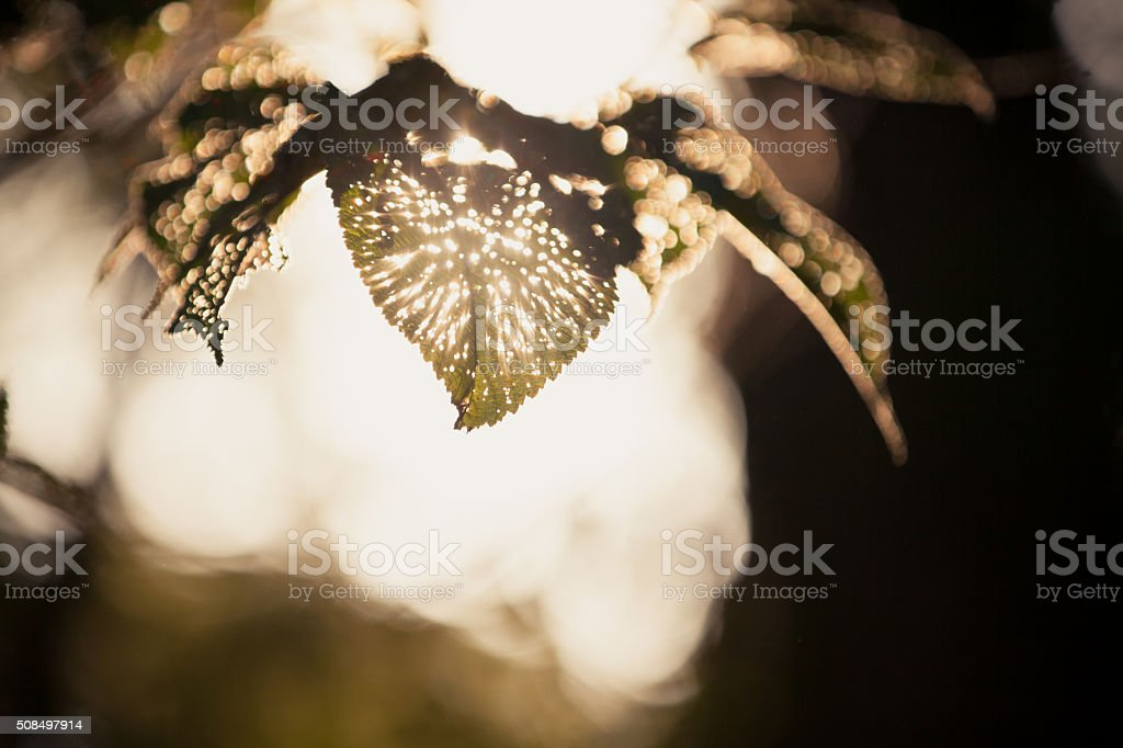 Insect Holes in Leaves stock photo