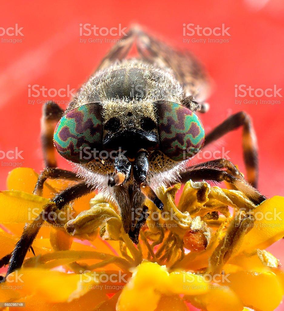 Insect horsefly macro stock photo