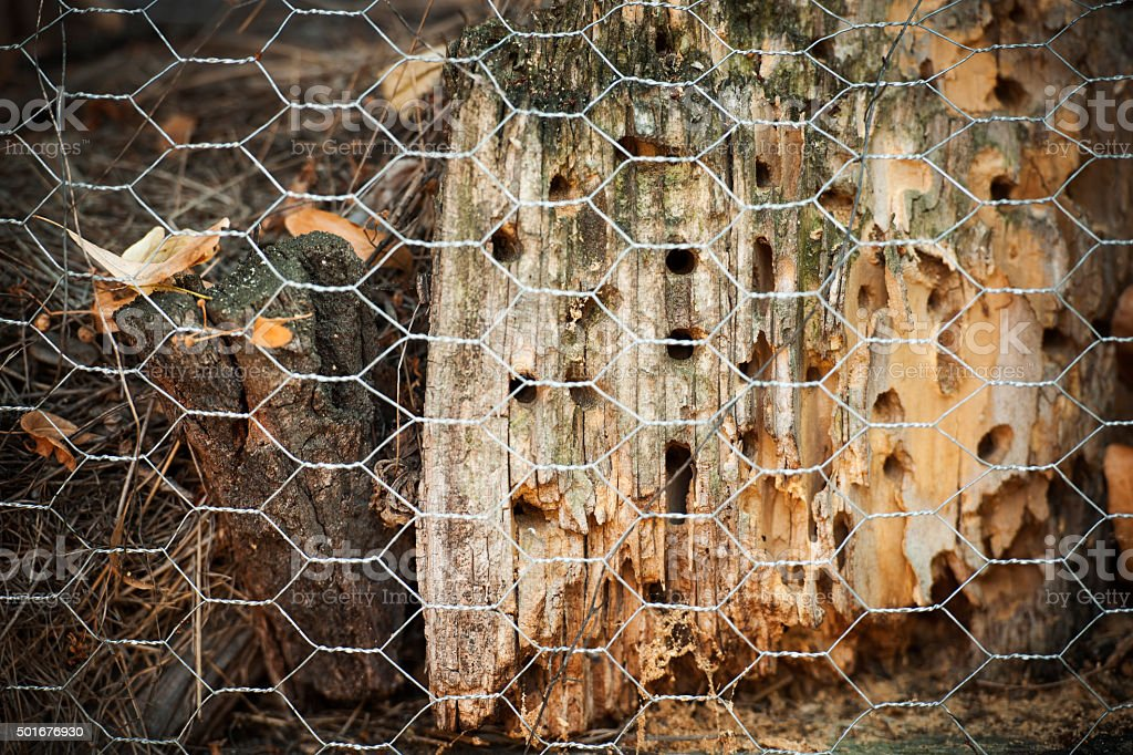 Insect House with grid stock photo