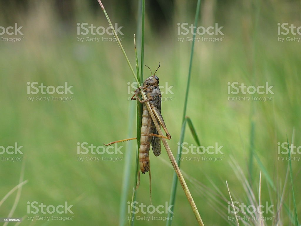Insect Hugging Grass 1 stock photo