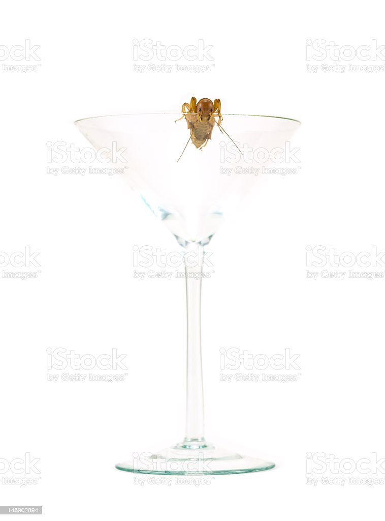Insect in Martini Glass royalty-free stock photo