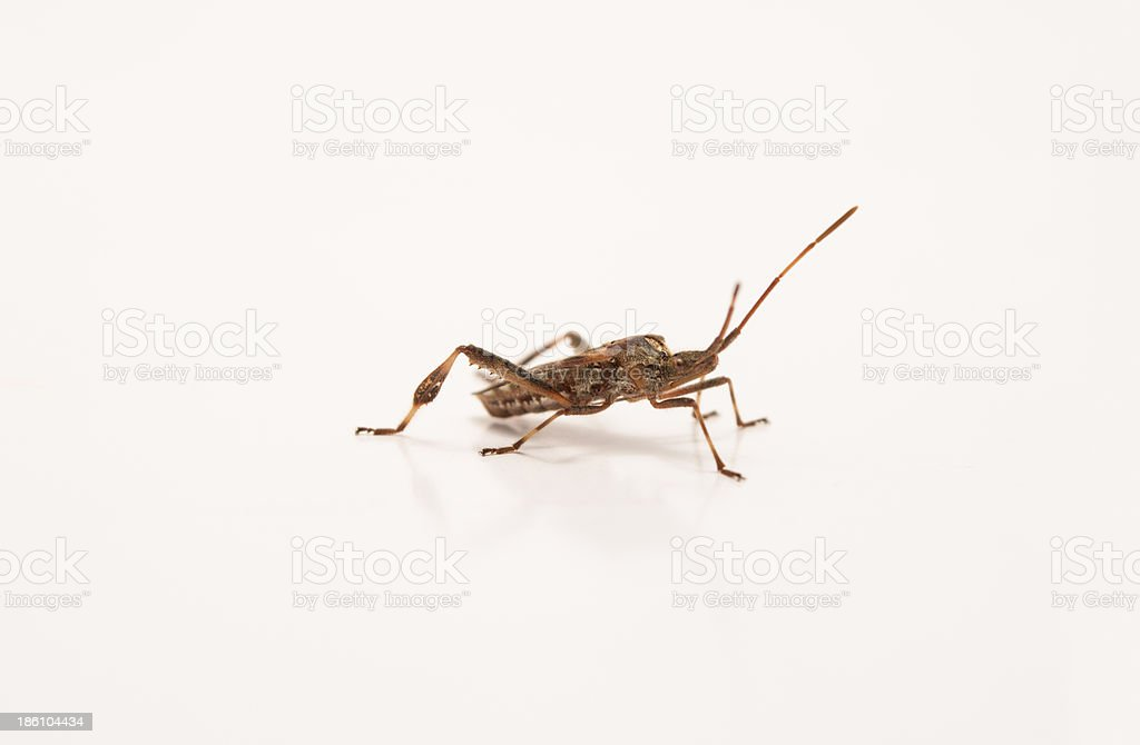 insect invertebrate royalty-free stock photo