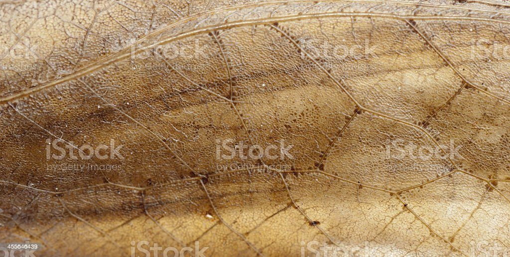insect katydid wing detail royalty-free stock photo
