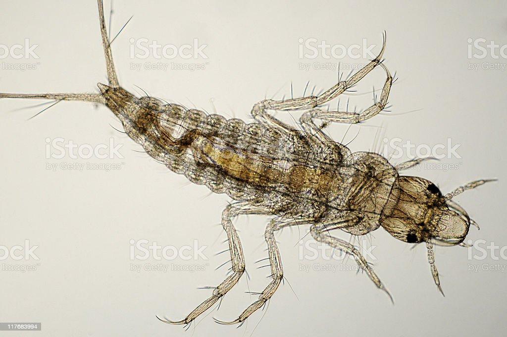 insect larva micrograph royalty-free stock photo