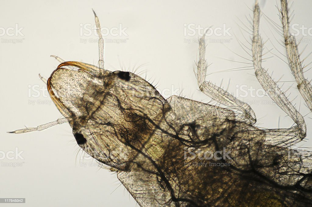 insect larva royalty-free stock photo