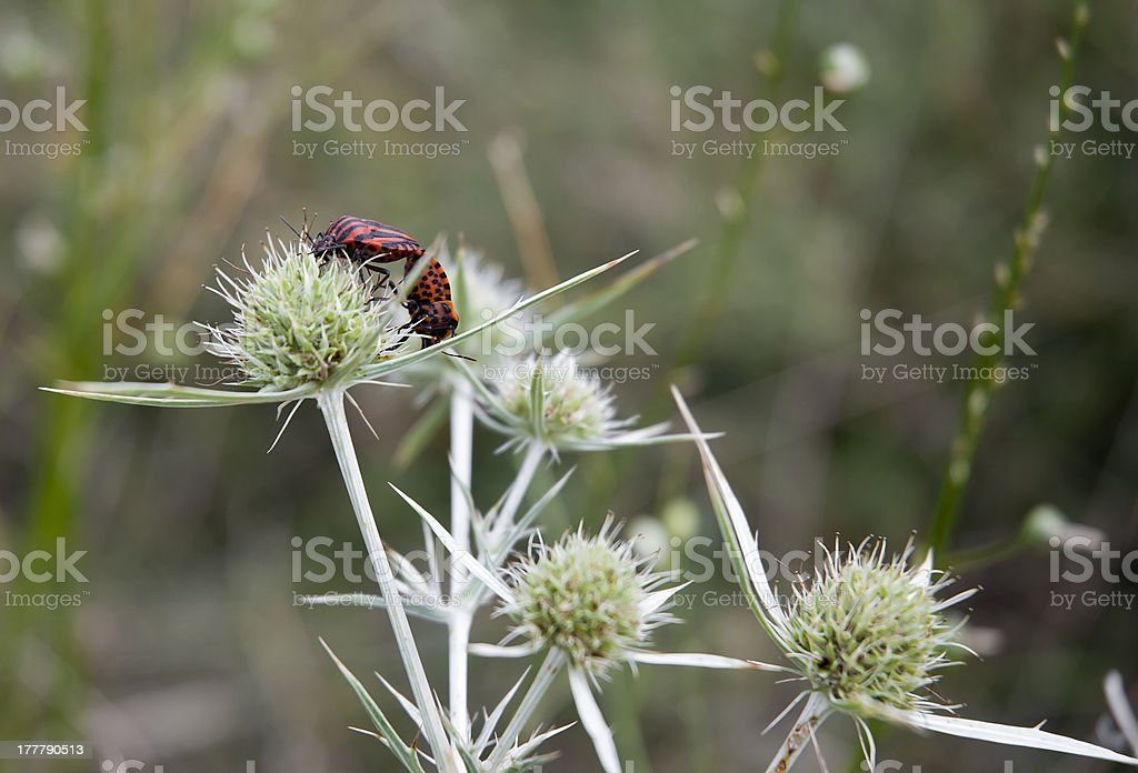 Insect mating royalty-free stock photo