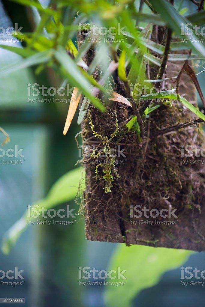Insect mimics moss stock photo