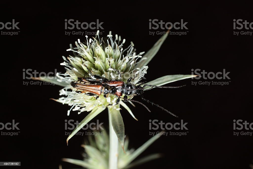 insect on a plant stock photo