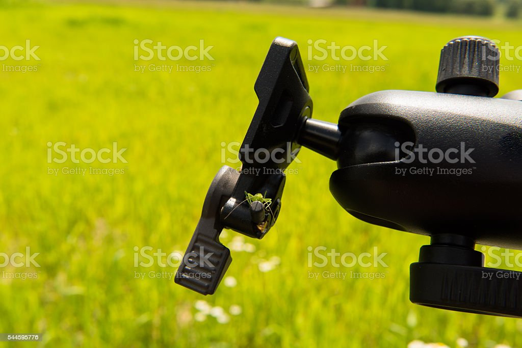 insect on a tripod large macro plan stock photo