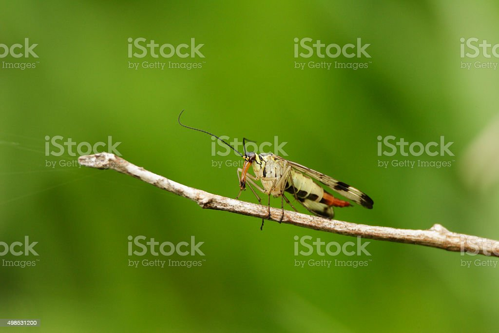 insect on a twig stock photo