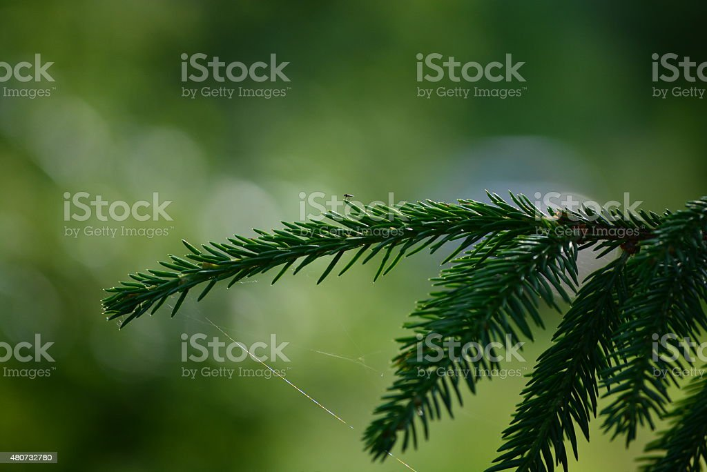 Insect on boughs royalty-free stock photo