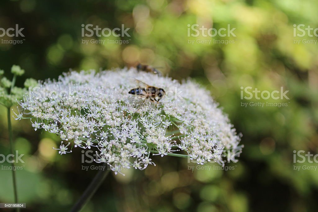 Insect on flower in the summer stock photo