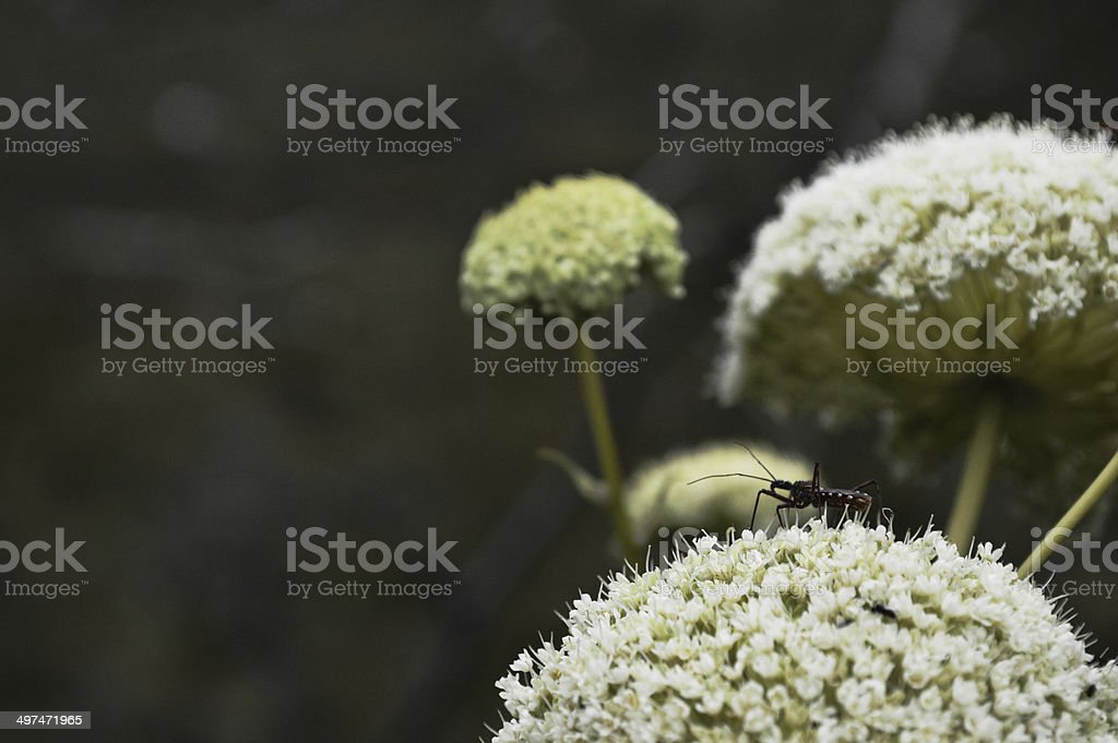 Insect on Flower stock photo