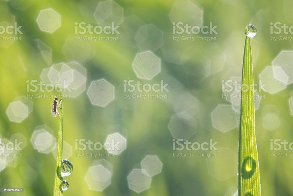Insect on grass stock photo