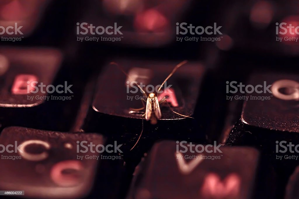 Insect on keyboard stock photo