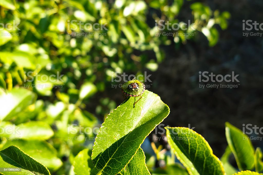 Insect on leave in spring. stock photo